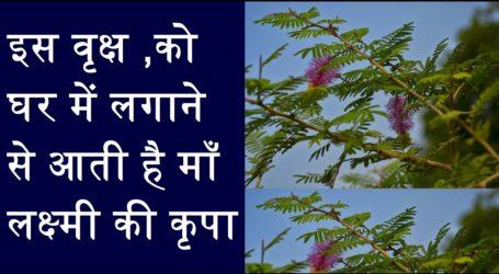 Ghar Mein Shami Vriksha Kyun Zaroori